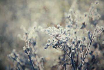 frozen winter frost frostymorning nature