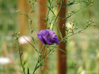 flower closeup photography purple nature
