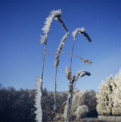 winter hoarfrost sunny landscape nature