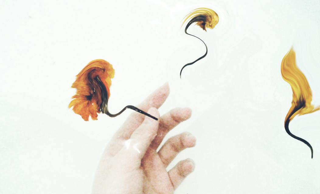 #flower #espiral