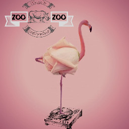 flamingoremix freetoedit meownself pinkflamingo pink