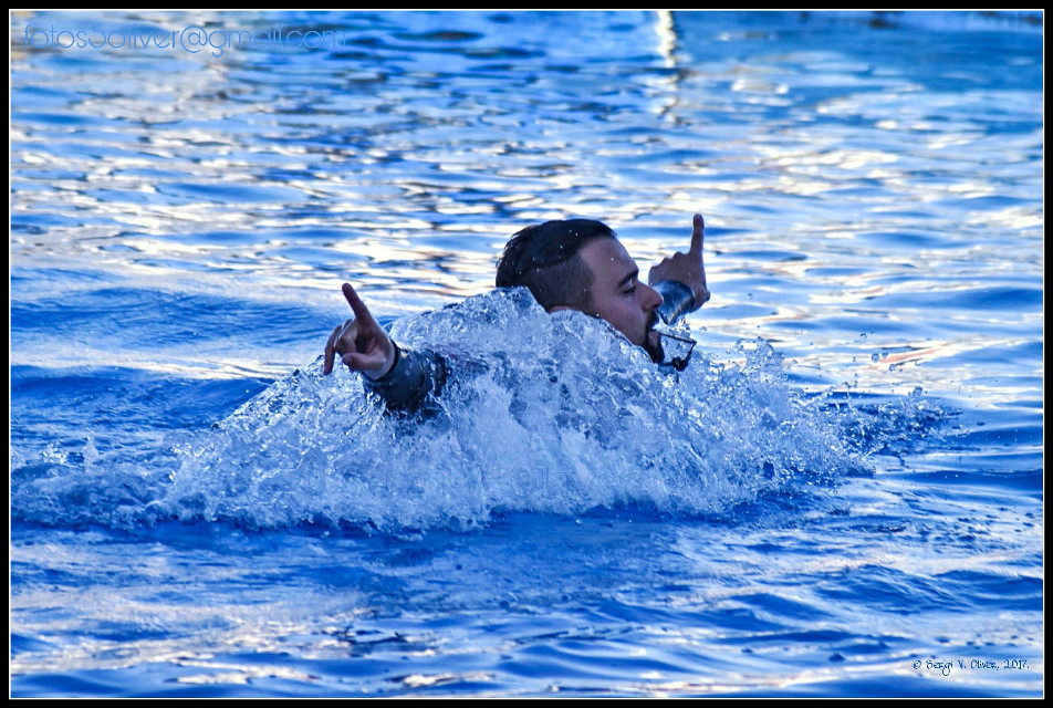 The Oceanogràfic (València, Spain): Dolphin show.   #photography #animals #dolphins #show #dolphinarium #oceanografic #valencia #people