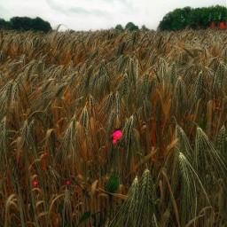 freetoedit interesting nature naturephotography summer
