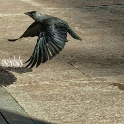perfectworld blackbird photography momentosinolvidables bird