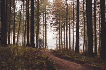 sunset landscape forest light like