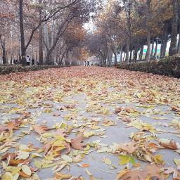 amazing fall bojnord iran student_park freetoedit