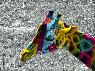 edited doubleexposure colorful colorsplash giraffe freetoedit