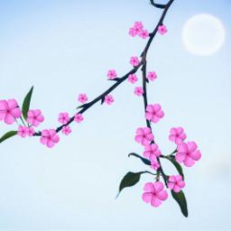 freetoedit remix flowers pink sunnyday