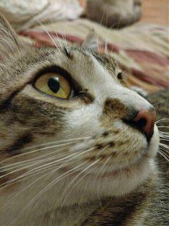 cats petsandanimals pets dpcanimaleyes
