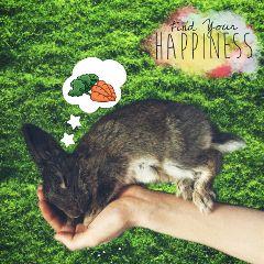 freetoedit somebunnylovesyou rabbit love animal