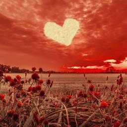 valentinesday loveisintheair