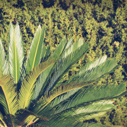 green palmtree greenshrubsbackground sunnylight naturephotography