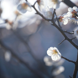 bokeh flowerphotography flower flowers lightandshadow freetoedit