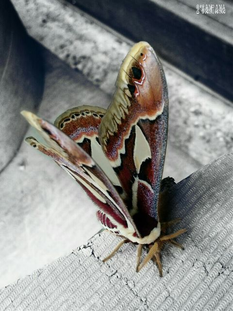 photography nature bugs moth sharpen