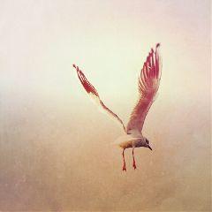 bird nature sky