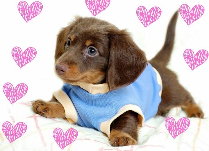 #FreeToEdit  #petlove  #petcity  #pettime  #loveyourpet  #petdog  #petlife  #dogtime