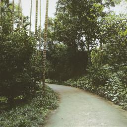 nature road path photography freetoedit