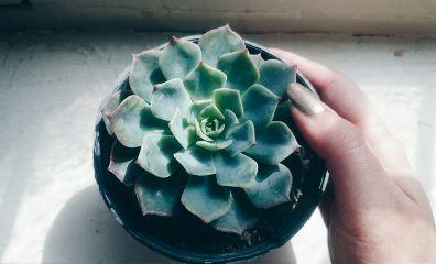 freetoedit photography plant cactus macro