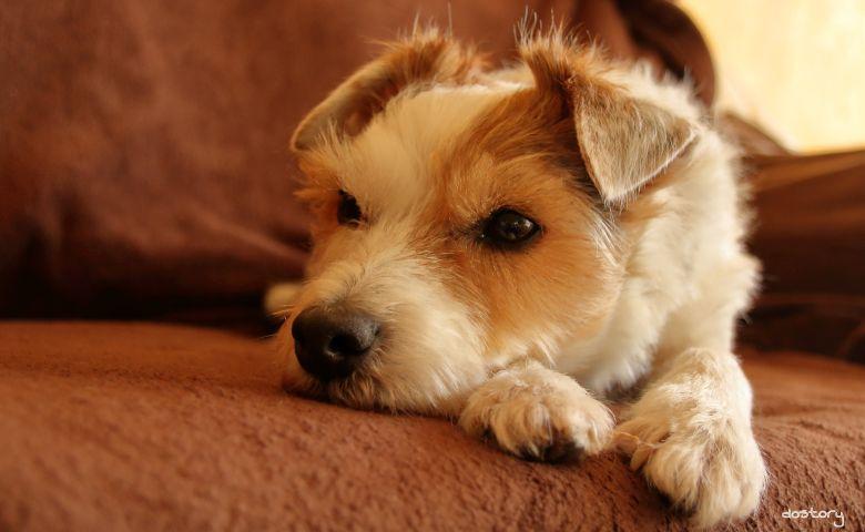 photography dog myphoto petsandanimals