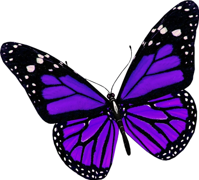 #butterfly #blue #black