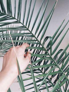 freetoedit palmtrees summer