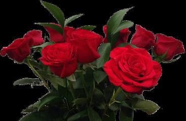rose red freetoedit