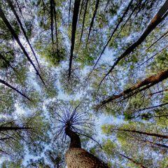 nature picsart indonesia motivationquotes freetoedit
