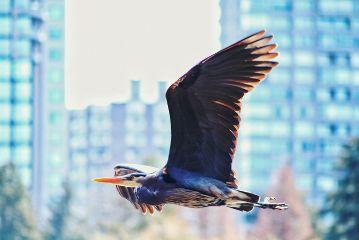 photography freedom wildlife wild