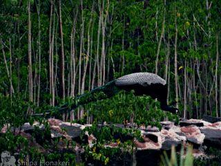 nature woods peacock bird greatnature