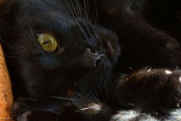 cat animal nature
