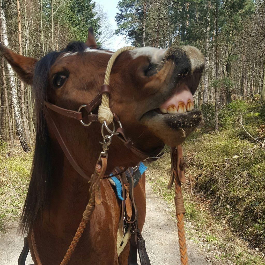 Pferde Bilder Lustig