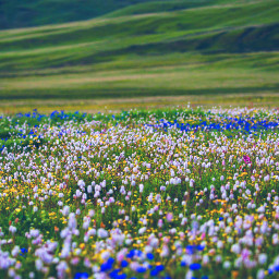 colorful photography travel tibet flower