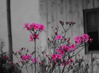freetoedit color