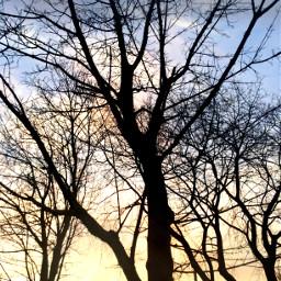 freetoedit sunset trees tree bluesky